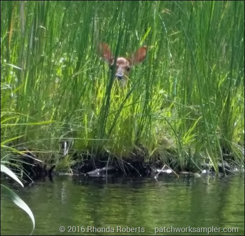 Fawn Crystal River